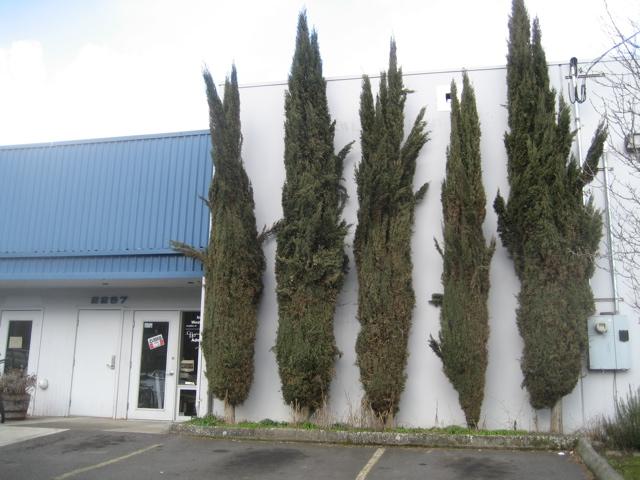 portland-trees