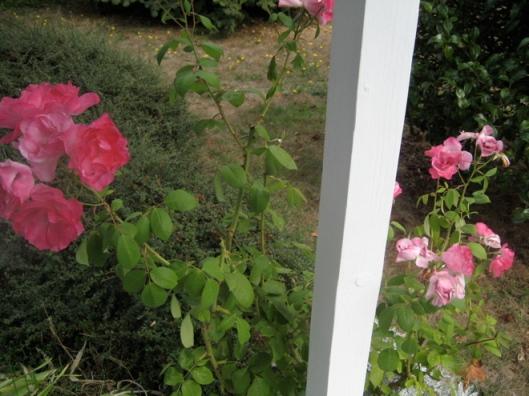 roses2008