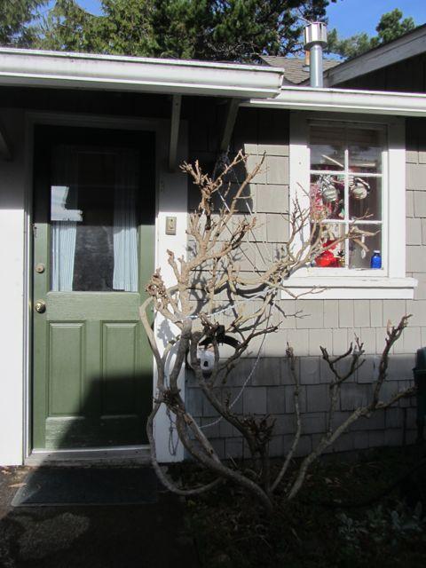 winter wisteria