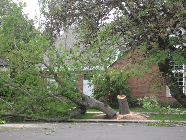 COURT ST TREE DOWN