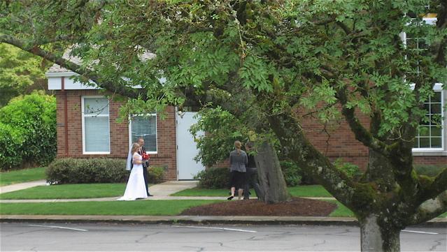 WEDDING CHURCH TREE