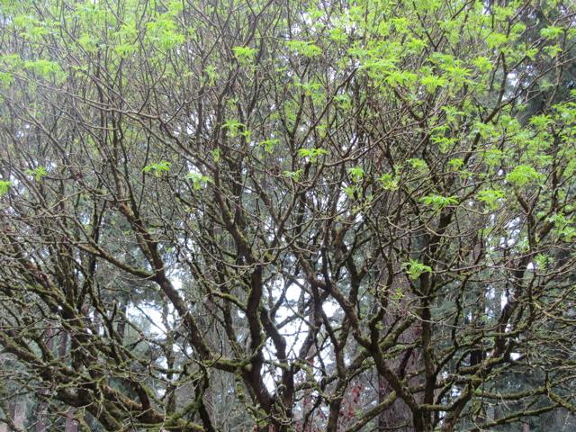 Tabor Trees