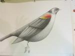 CC ballet bird