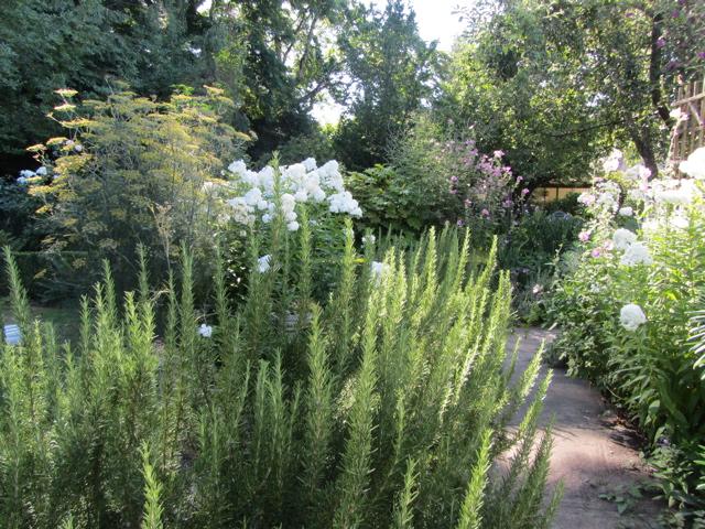 Summer rosemary