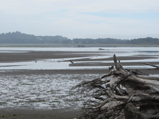 Bay at low tide
