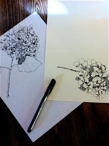 hydrange drawings