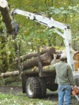 the tree is loaded