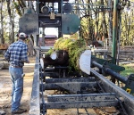 tree goes into the mill