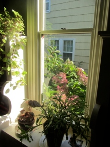 front parlor window