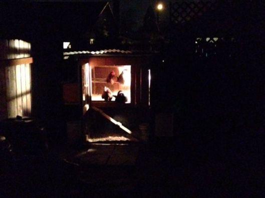 night coop