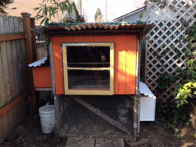 painted coop