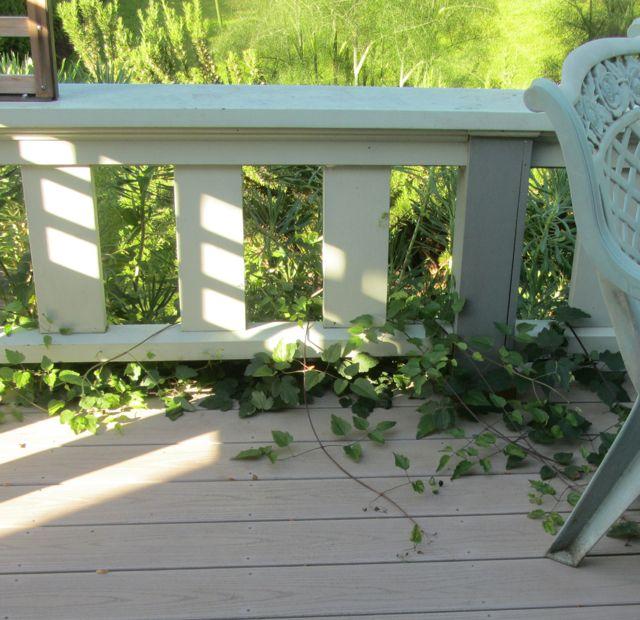 garden deck:chair