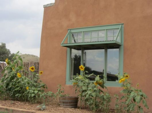 Cewrrillos sunflower 2