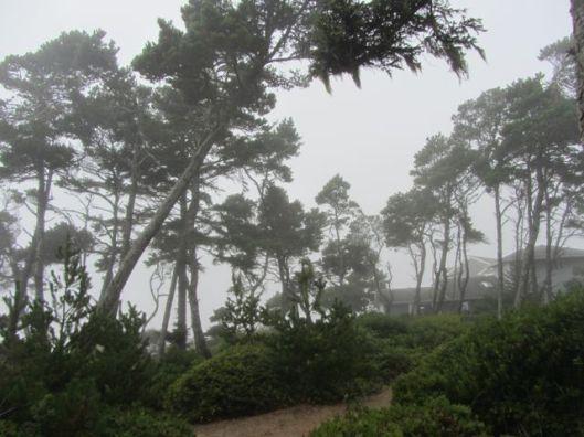 fog at JY