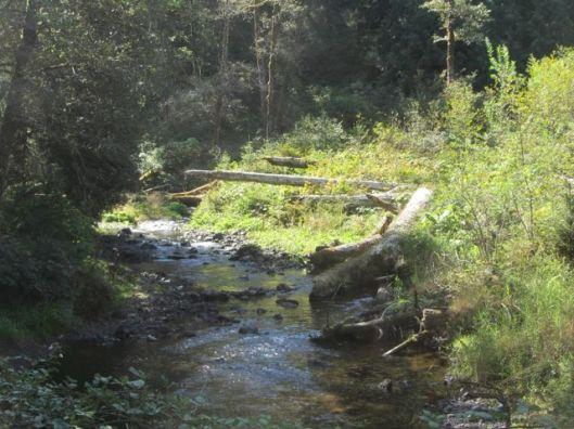 Schooner Creek 1