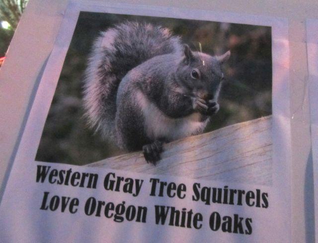 P squirrel