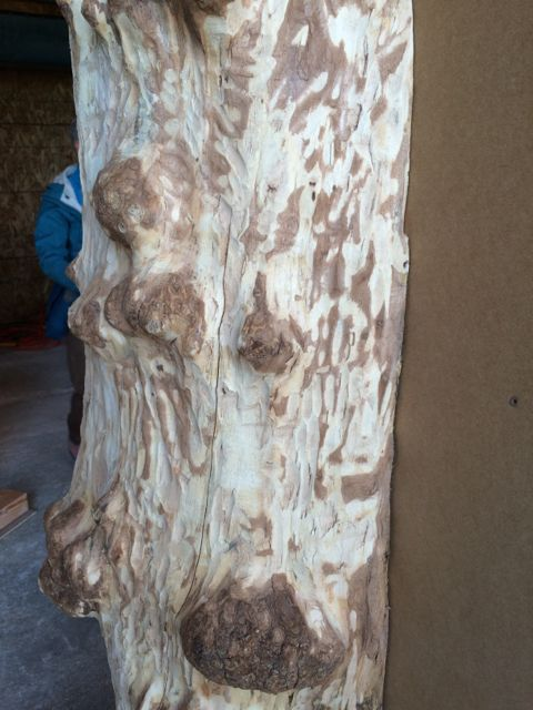 CR tree 1