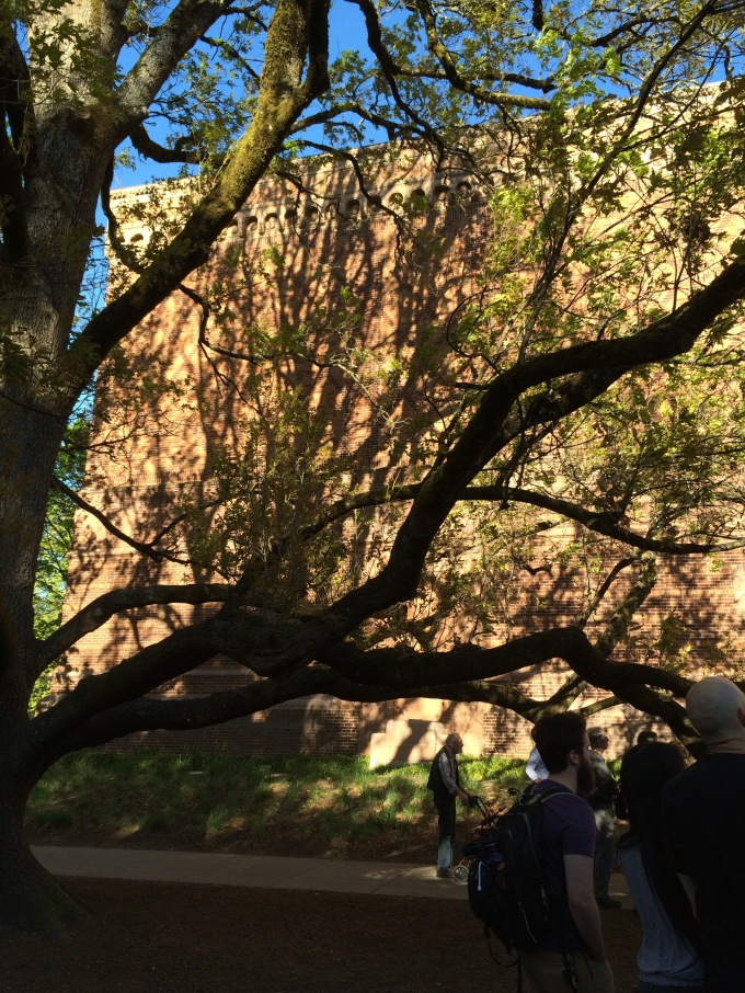 tree on Schnitz