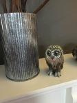 Kristin's owl